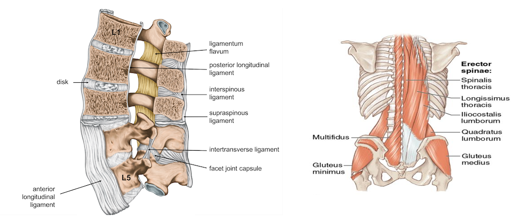 low-back-anatomy