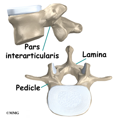 lumbar-vertebral-anatomy